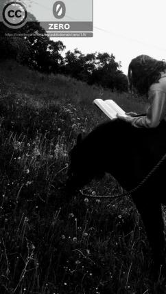 Lesen Pferd