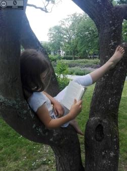 Lesen im Baum 2