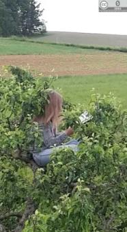 Lesen im Baum 3