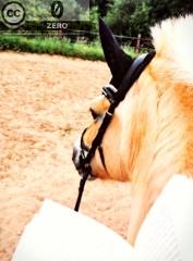 Lesen auf dem Pferd